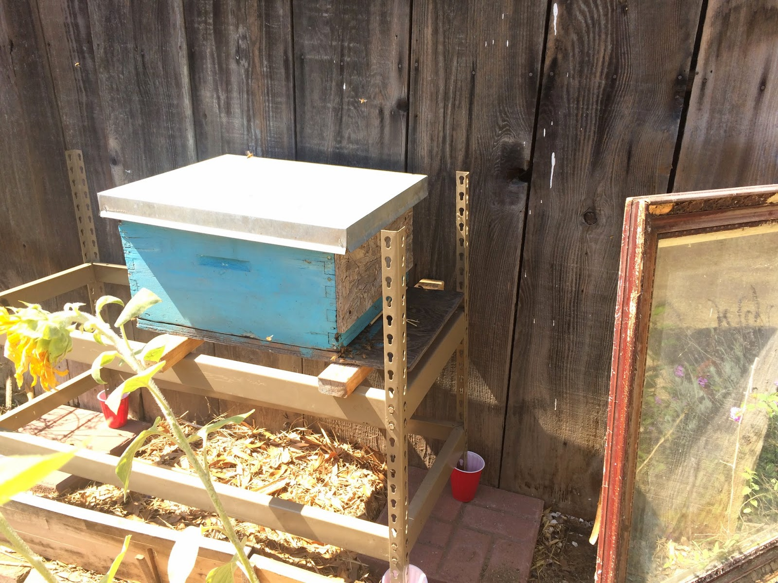 Bees Safely in their new home