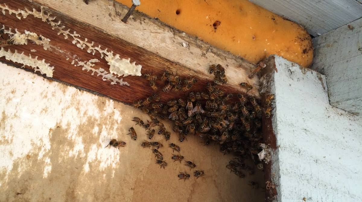 Bees Wondering where their Home went