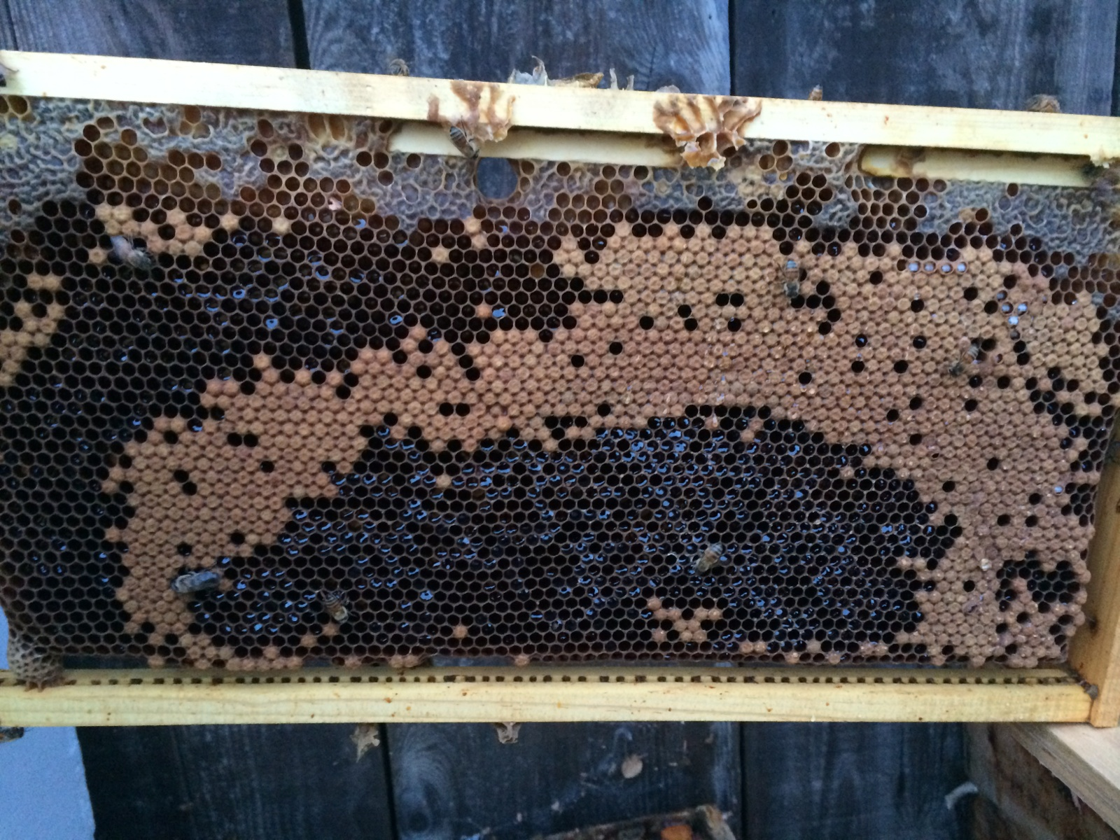 Cranky Bees because brood nest backfilling with honey, triggering swarming instinct