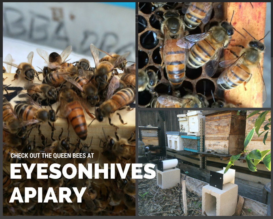 EyesOnHives Apiary Raising Queen