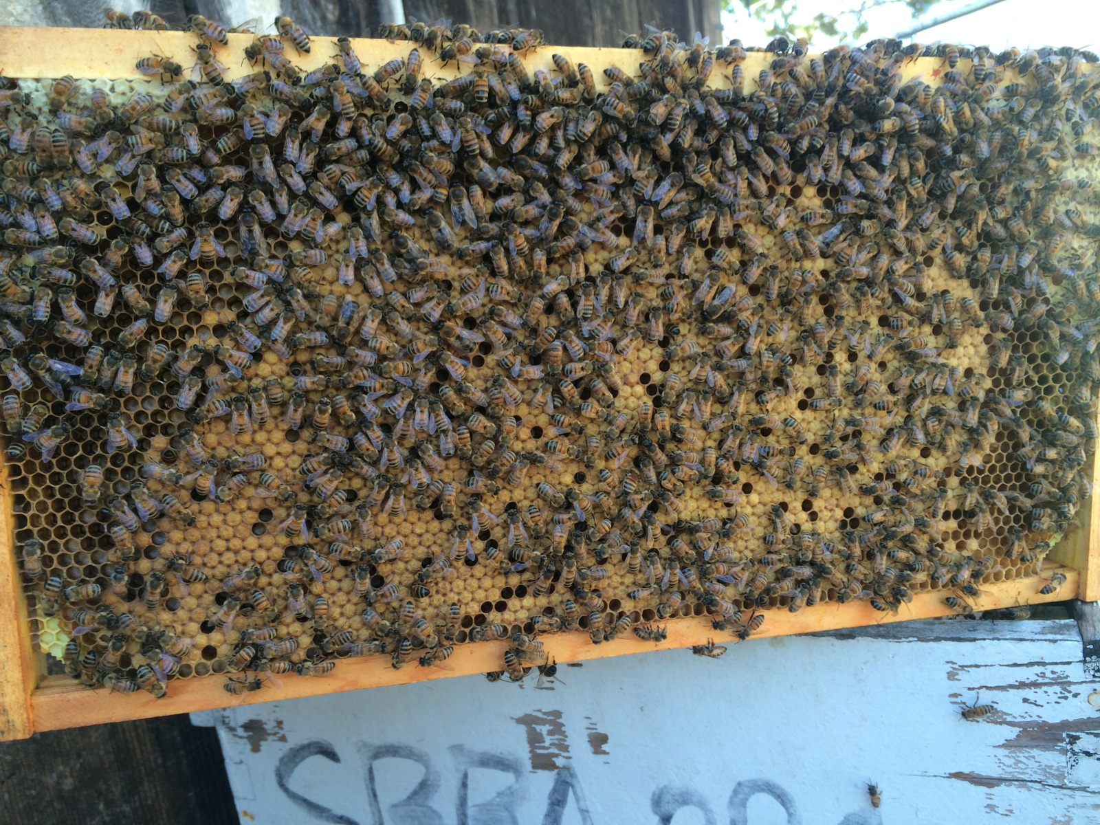 Impressive Brood Pattern for a Nuc