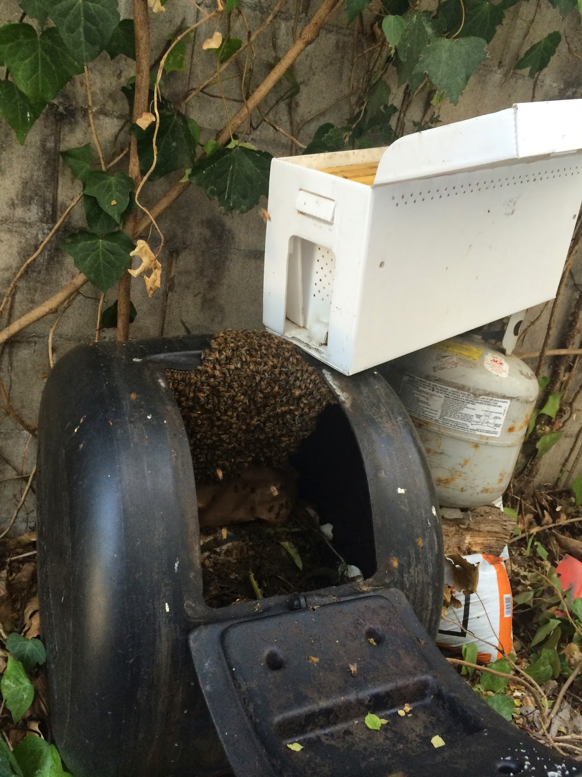 Nuc and Bee Cluster in the Rescue