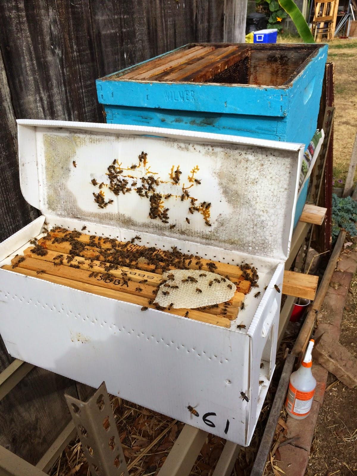 Swarm Rescue Nuc and Comb
