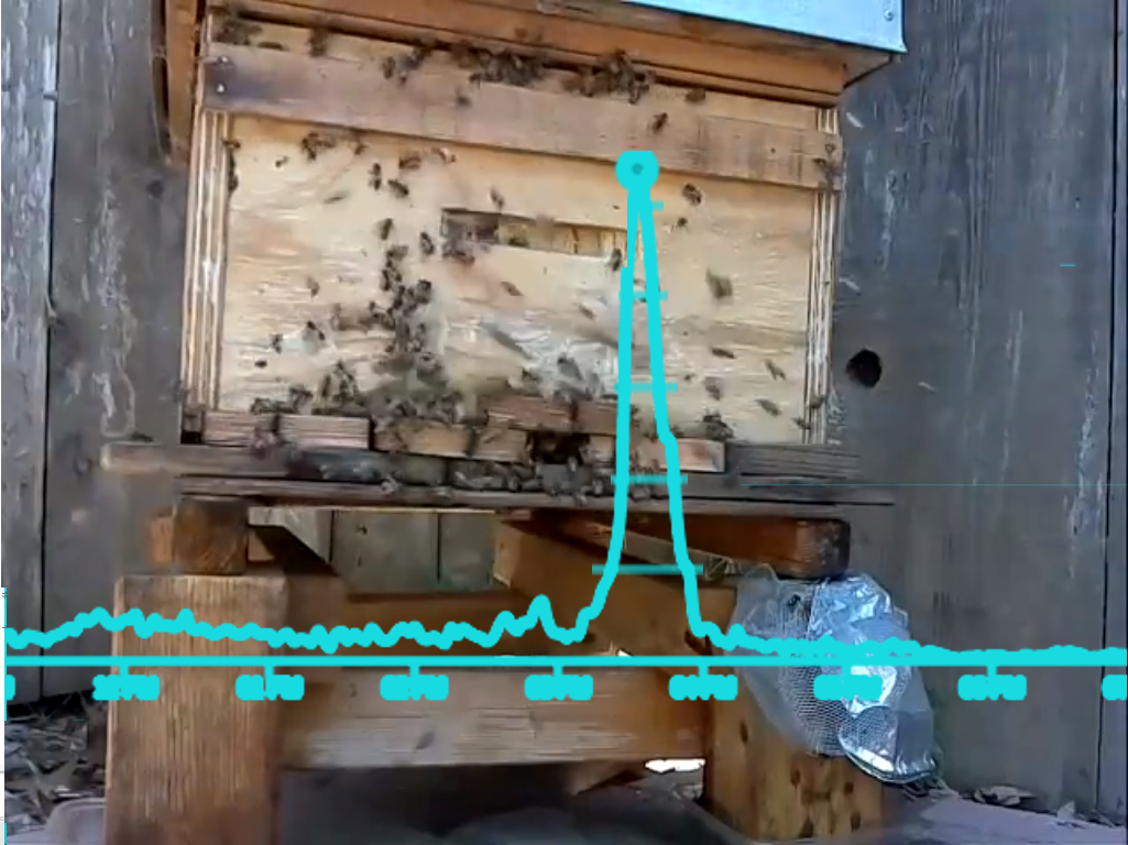 The heartbeat of a beehive