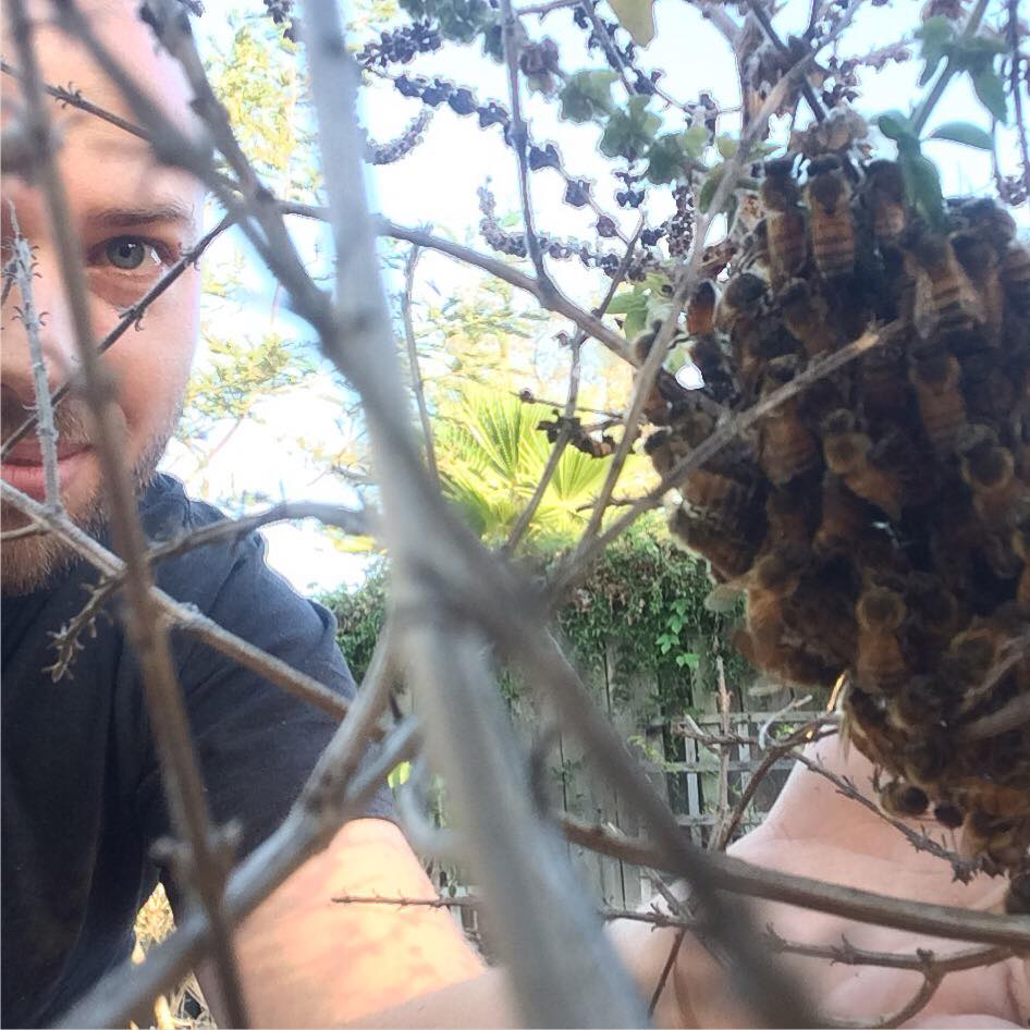 Swarm Rescue and future Honey Bee Health Monitored Bees
